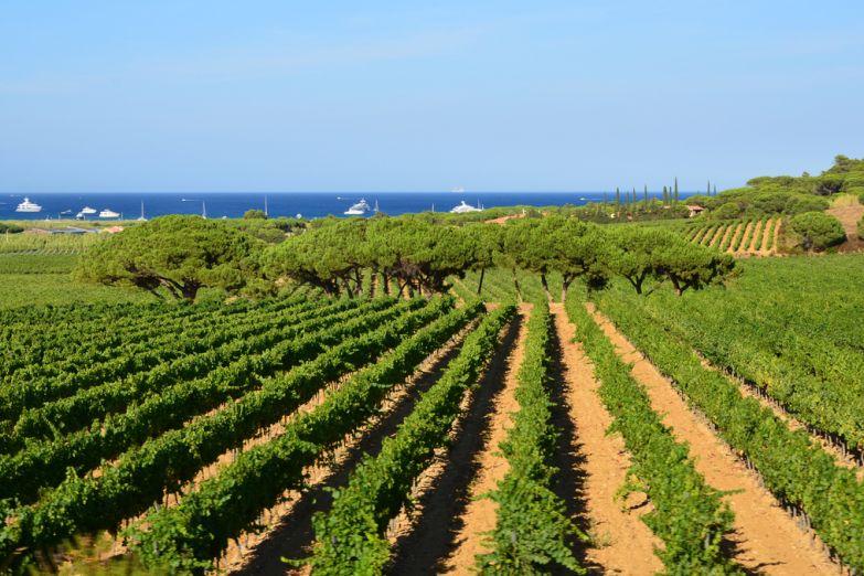 Виноградник Les Tournels в Раматюэле