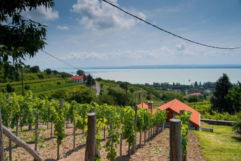 Виноградники на берегу озера