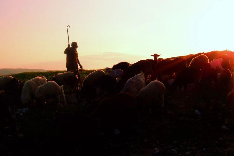 Пастух и овцы