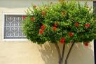 Город украшен цветущими растениями почти весь год