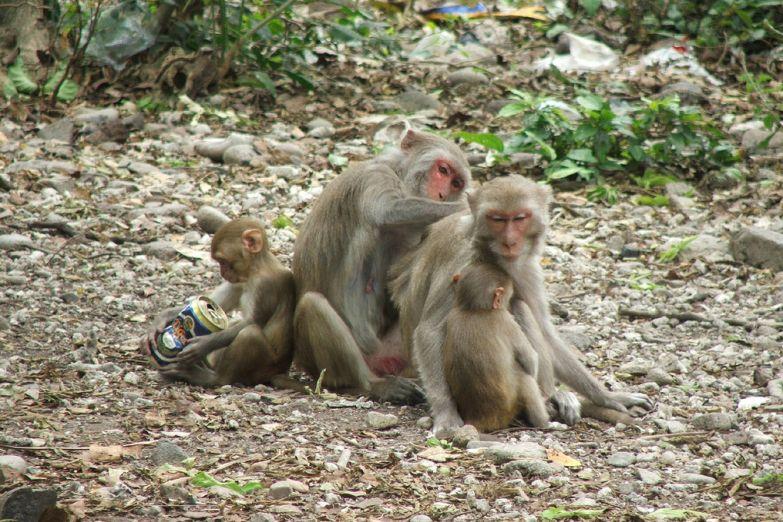 Остров обезьян Хон Лао