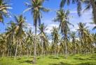 Пальмовые плантации