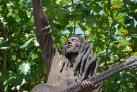 Памятник королю регги