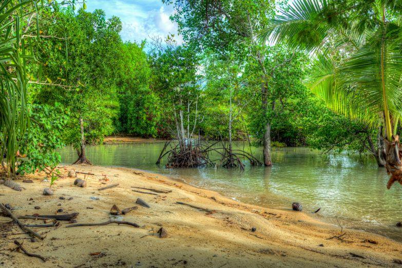Мангровый лес подбирается прямо к пляжу