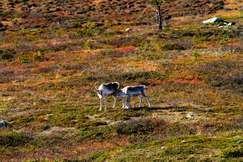 Осенние красоты Лапландии