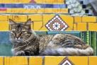 Кот на лестнице Селарона