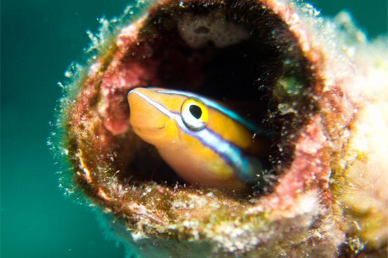 Яркий обитатель коралловых рифов