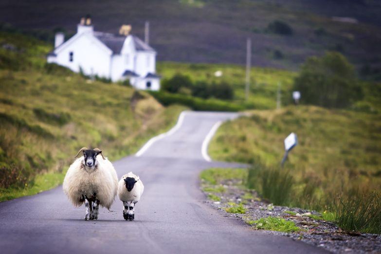 На деревенской дороге