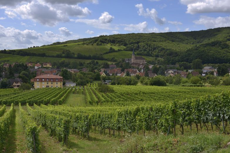 Эльзасское вино рождается здесь