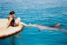 Общение с дельфином