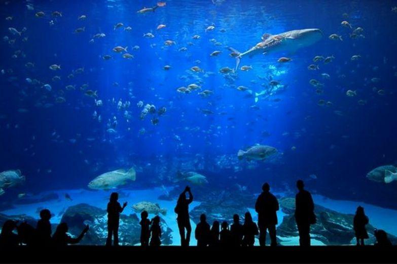 Океанариум в парке развлечений Vinpearl Land