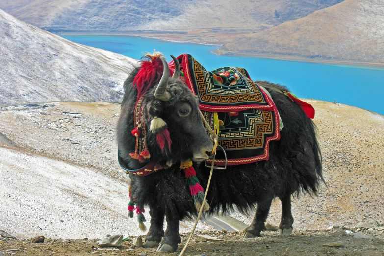 Як на Тибете
