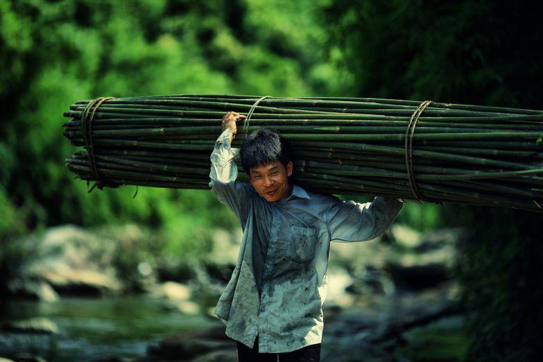 Вьетнамский крестьянин с бамбуком