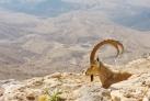 Природа Израиля