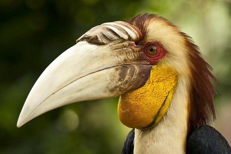 Питомец зоопарка при парке Мини-Индонезия