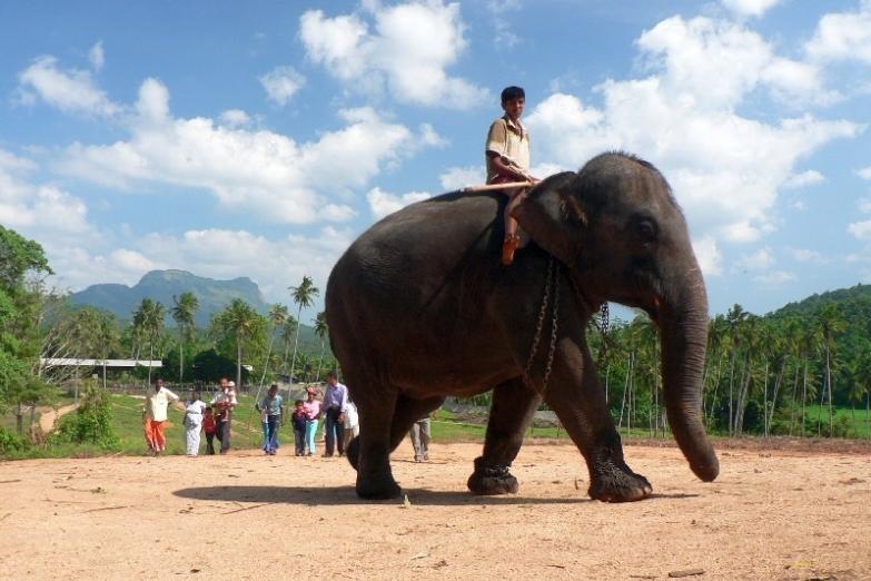 Приют для слонов в Пиннавеле