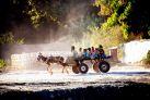 Повозка с осликом