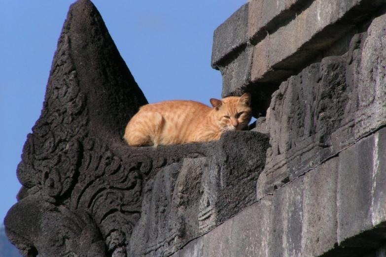 Пушистый страж храма Боробудур