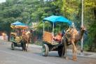 Местный транспорт в Агре