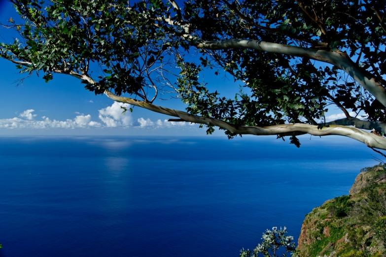 Остров-сад в океане