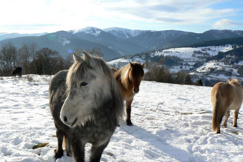 Стадо лошадей пасется на горных склонах