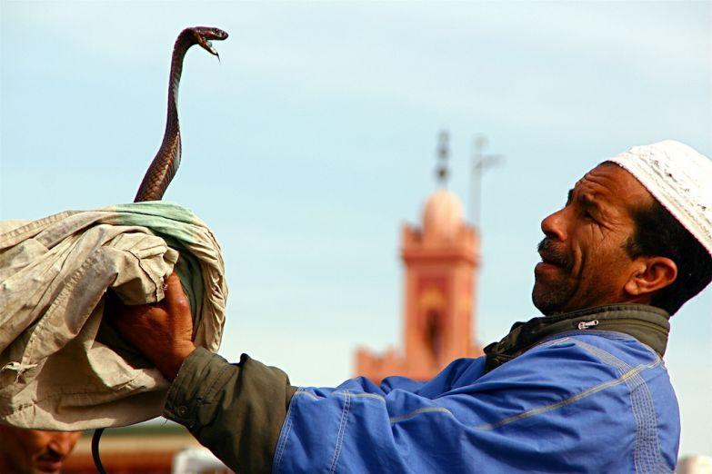Укротитель змей на площади Джема–эль–Фна