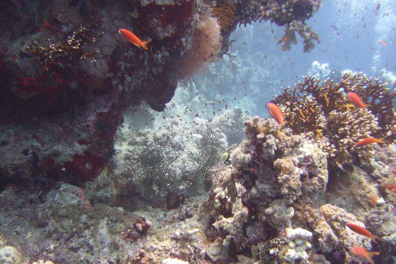 Подводная красота