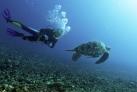 Исследуем подводный мир у берегов Ломбока