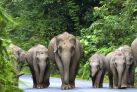 Слон - главный символ Тайланда