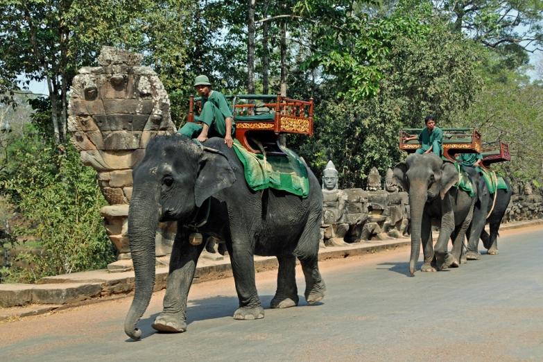 Прогулка на слонах в Ангкор-Ват