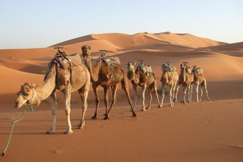 Экскурсия по пустыне