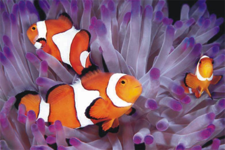Яркие тропические рыбки