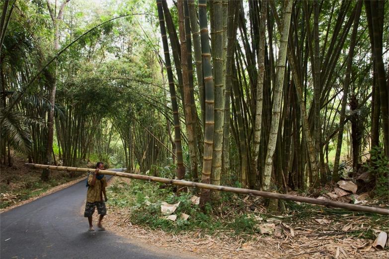Крестьянин в бамбуковых джунглях