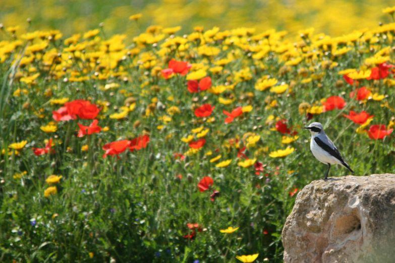 Цветущий луг