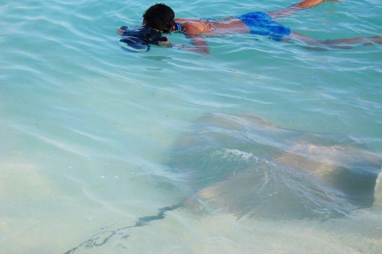 Плаваем со скатами