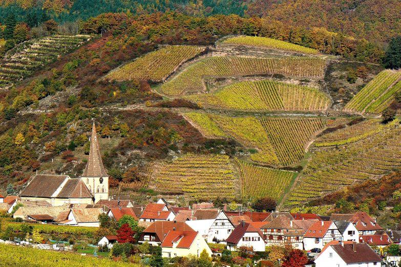 Виноградники вокруг небольшого городка
