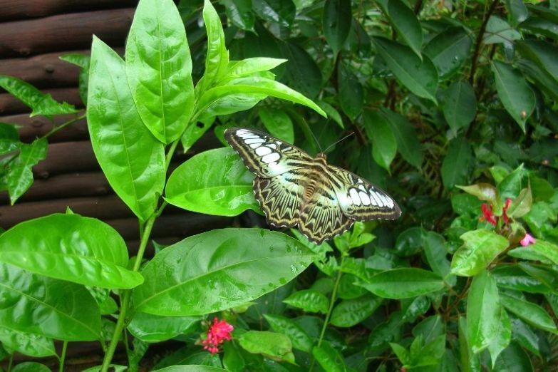 Бабочка в тропическом саду