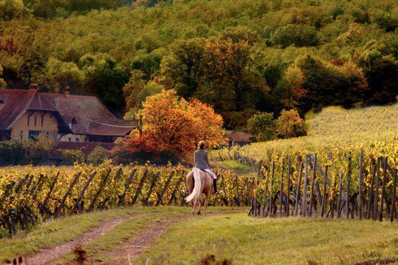 Осень в Эльзасе