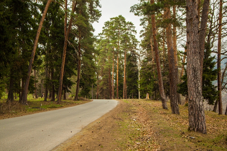 Лес в окрестностях Боржоми