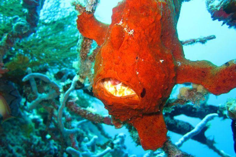Экзотические подводные обитатели