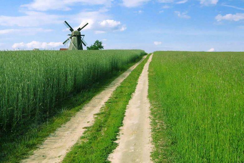Сельский пейзаж в Белоруссии
