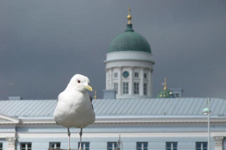 Чайка на фоне Кафедрального собора