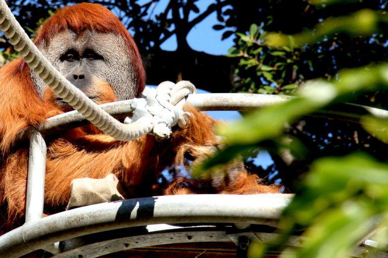 Зоопарк Перта