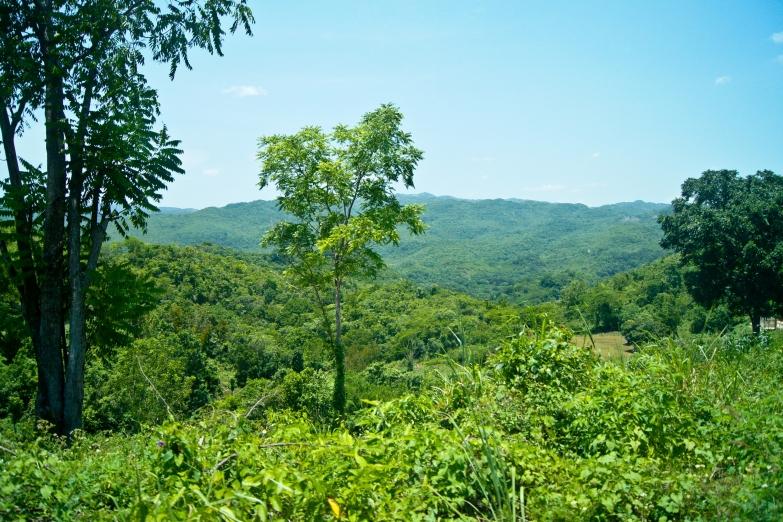 Пейзажи Голубых гор