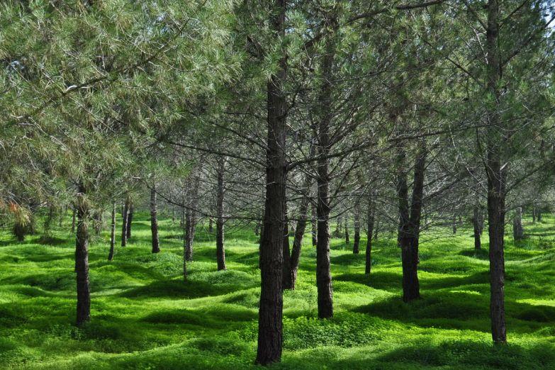 Парк в Никосии