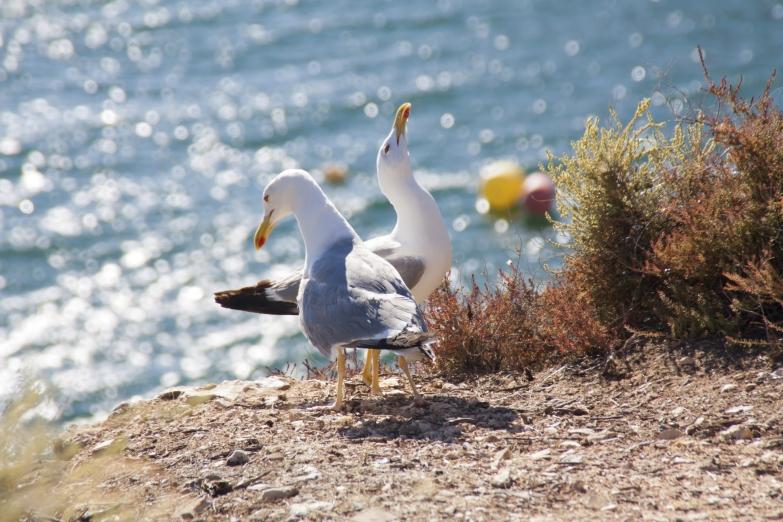 Фотогеничные чайки