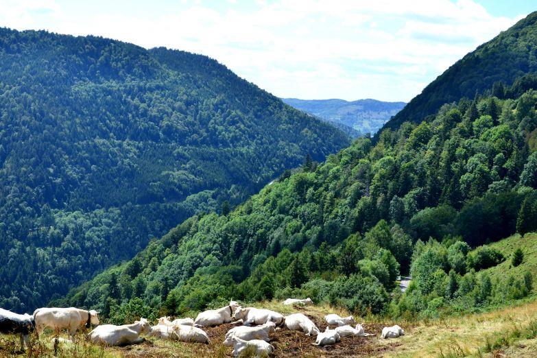 Горы Вогезы