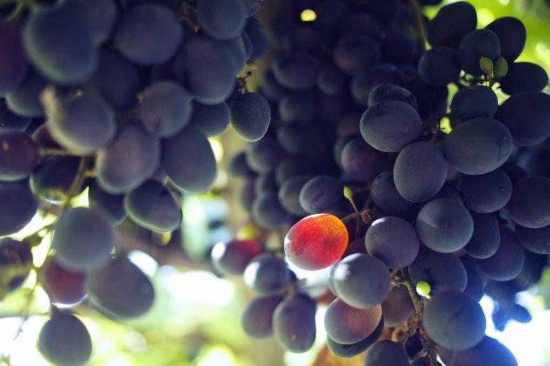 Виноград, из которого делают крымское вино