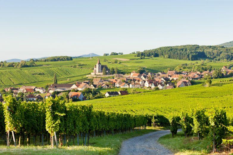 На винной дороге Эльзаса