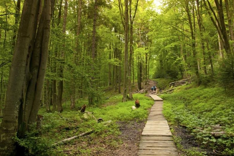 Лесная дорога у горы Тарница